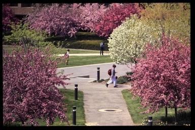Campus in spring