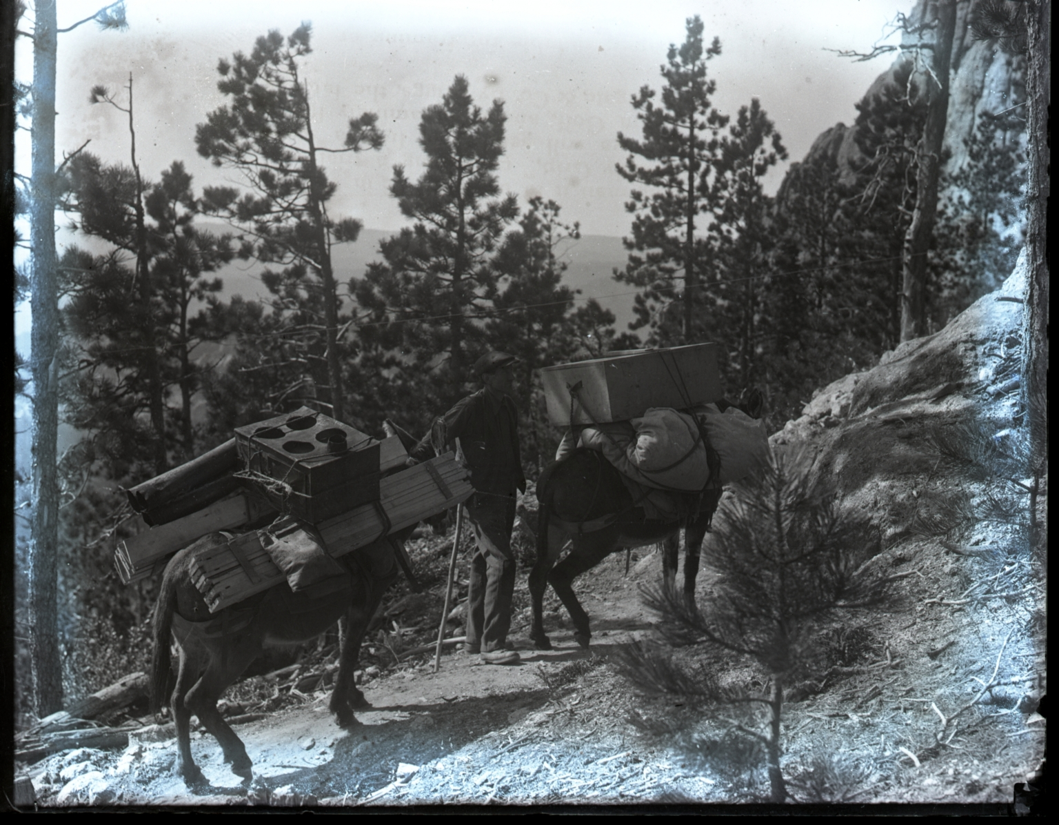 Pack horses carrying lumber and supplies uphill