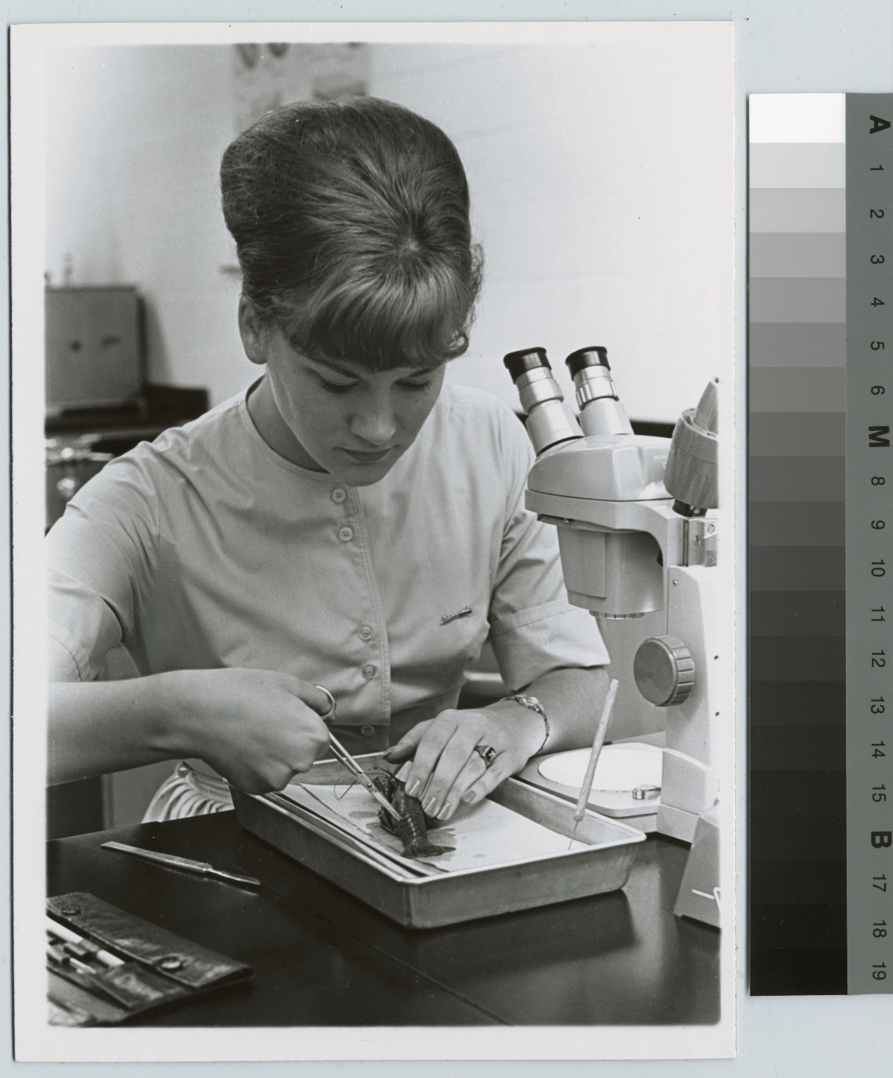 Academics, Biology, female student dissecting a crawfish, 1964