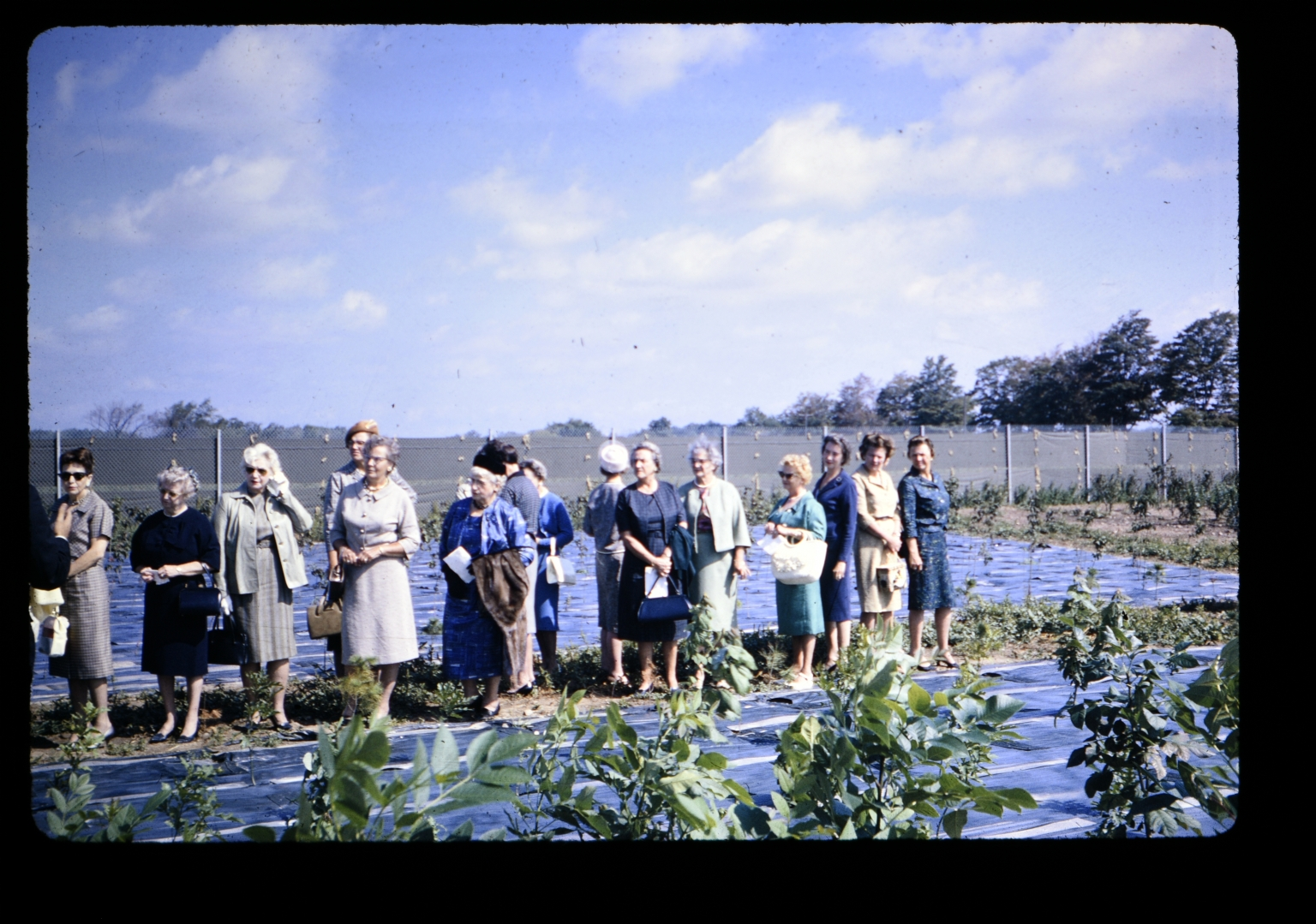 Women standing in field